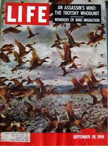 Life Magazine September 28, 1959 -- Cover: Southbound Ducks