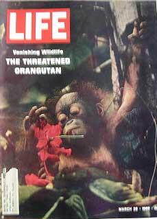 Life Magazine March 28, 1969 -- Cover: The Threatened Orangutan