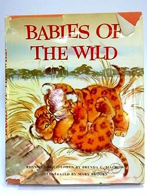 Babies of the wild: Brenda G Macrow