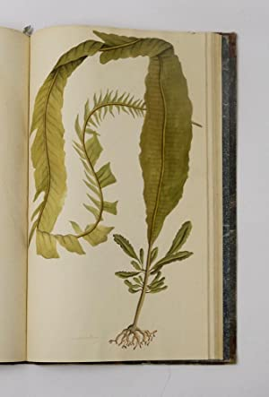 Coloured figures of marine plants, found on the southern coast of England; illustrated with ...
