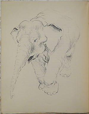 Tiere hinter Gittern. Mit zahlr. (4 ganzseit.) Orig.-Lithographien von Fred Stauffer.: STAUFFER - ...