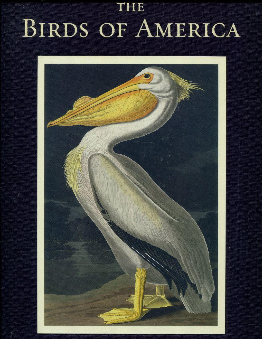 John James Audubon/'s Watercolor Artwork Yellow-Bellied Flycatcher Vintage 1937 Birds of America Book Print