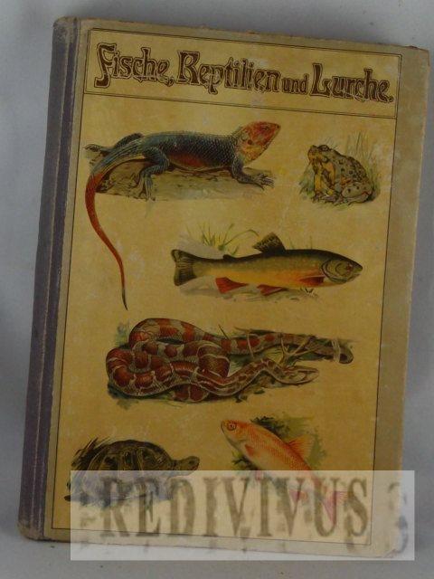 Fische, Reptilien und Lurche. 226 [farbigen chromlith.]: Schleyer, August: