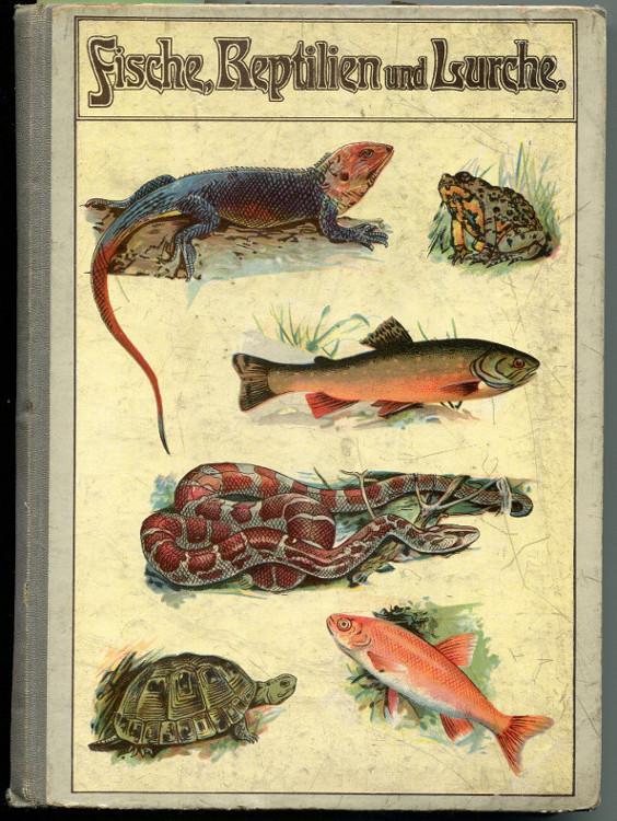 Fische, Reptilien und Lurche: Schleyer, August