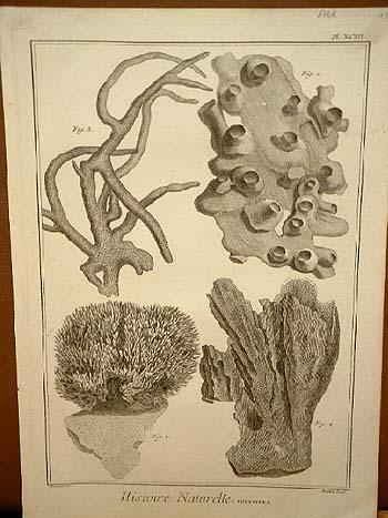 Polypiers ( = Korallen ): Kupferstich von: Benard