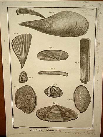 Coquilles de Mer ( = Muscheln, Meeresmuscheln: Benard