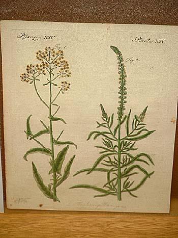"""Farben-Pflanzen: Altkolorierter Kupferstich aus dem """" Bilderbuch: Bertuch, Friedrich J."""