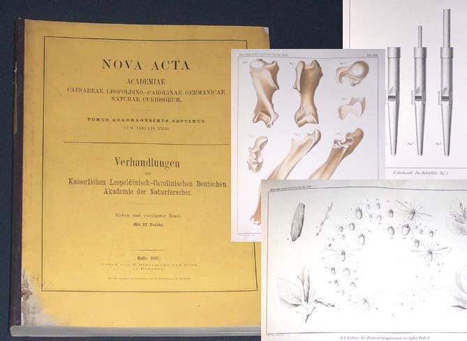 Nova Acta. Verhandlungen der Kaiserlichen Leopoldinisch-Carolinischen Deutschen: Gebhardt, Dr. Robert/