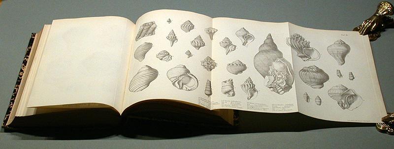 Geologische Beobachtungen über Süd-America - angestellt während: Darwin, Charles: