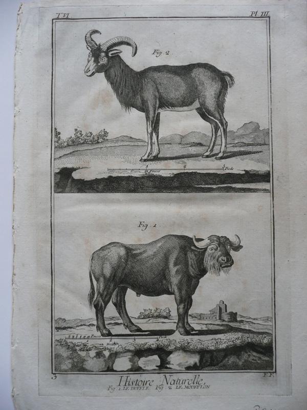 Büffel, Mufflon ( le Buffle, Le Mufflon: Benard