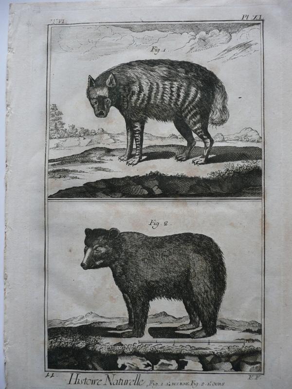Hyäne , Bär. ( le Hayane, Le: Benard