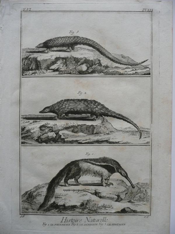 Ameisenbär, Schuppentier ( le Formilier, le Pangolin,: Benard