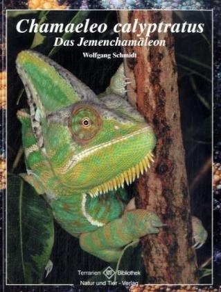 Chamaeleo calyptratus: Das Jemenchamäleon Terrarien Bibliothek. - Schmidt, Wolfgang