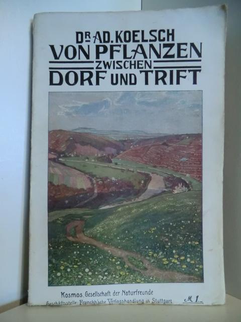 Von Pflanzen zwischen Dorf und Trift : Koelsch, Adolf: