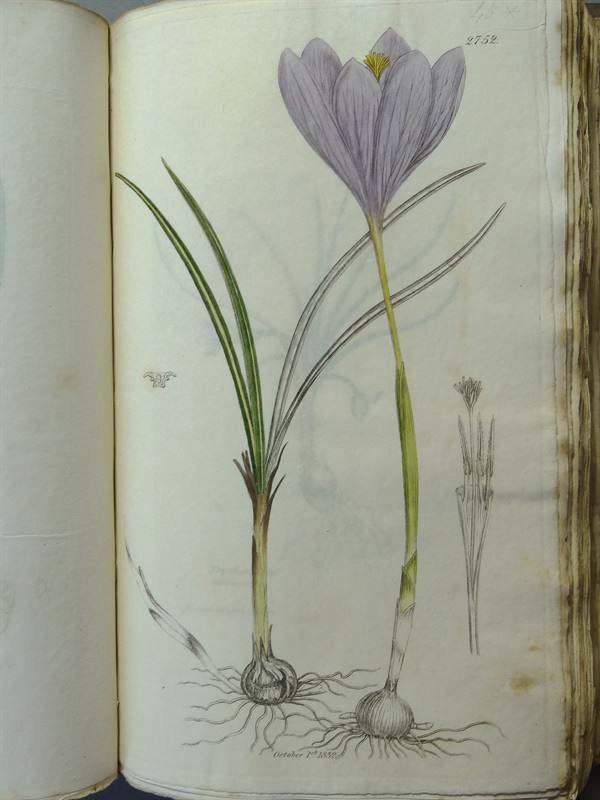 English Botany; or Coloured Figures of British: Sowerby, James and