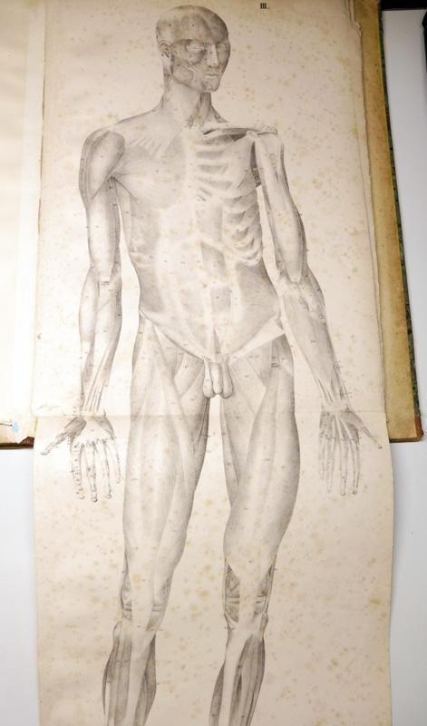 Anatomische Abbildungen oder Erläuterungstafeln zu dem Handbuche: Feigel, Johann Theodor
