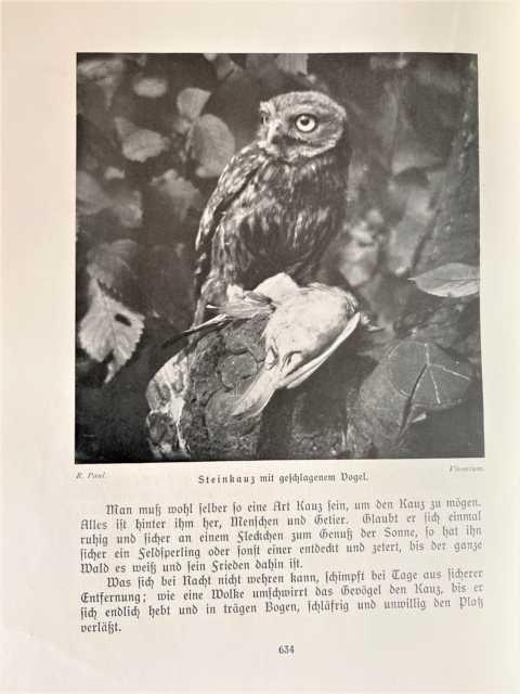 Vögel Band I u. II (von 3).: Meerwarth, Hermann und