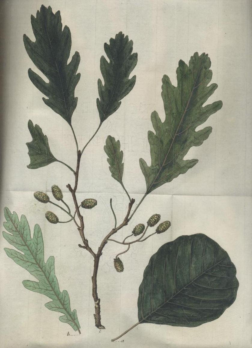 Vier hinterlassene Abhandlungen, das praktische Forst-Wesen betreffend.: Gleditsch, Johann Gottlieb