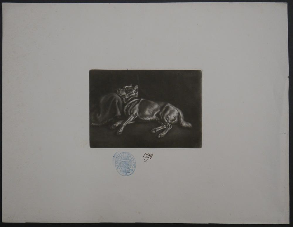 Schlafender Spitzhund. 1826.: Klein, Johann Adam.