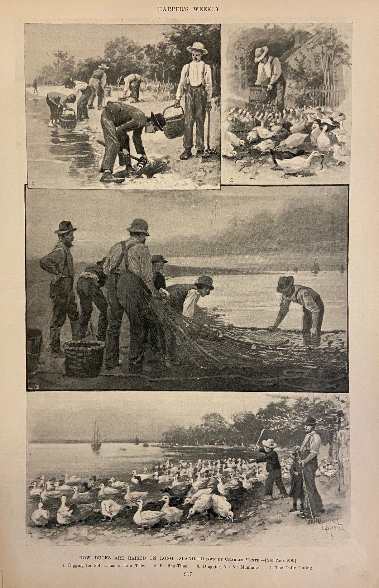 How Ducks Are Raised On Long Island: HARPER'S WEEKLY