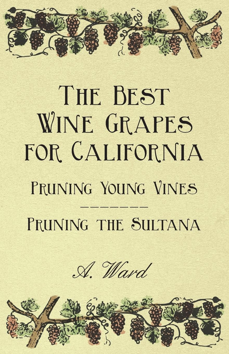 The Best Wine Grapes for California - Pruning Young Vines - Pruning the Sultana - Bioletti, Frederic T.