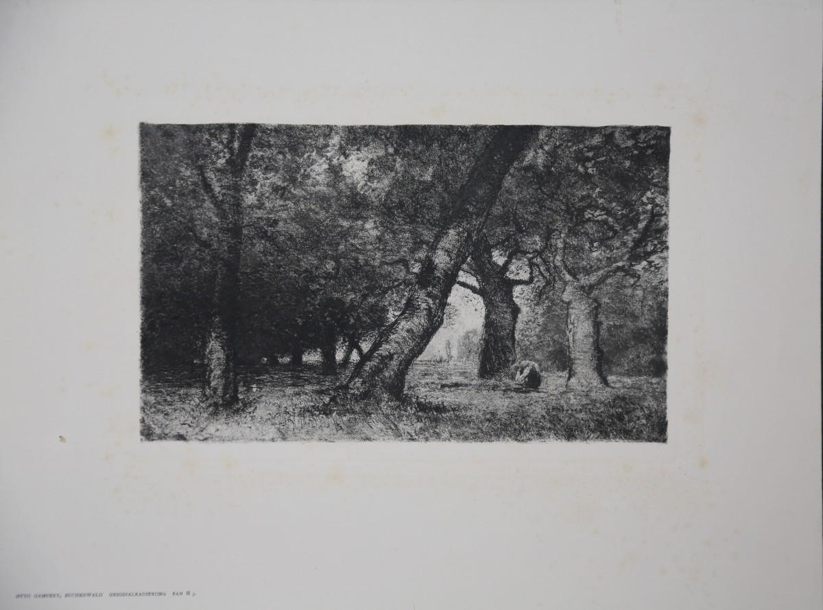 """Buchenwald"""". Original-Radierung aus Pan II, 3.: Gampert, Otto (1842-1924):"""