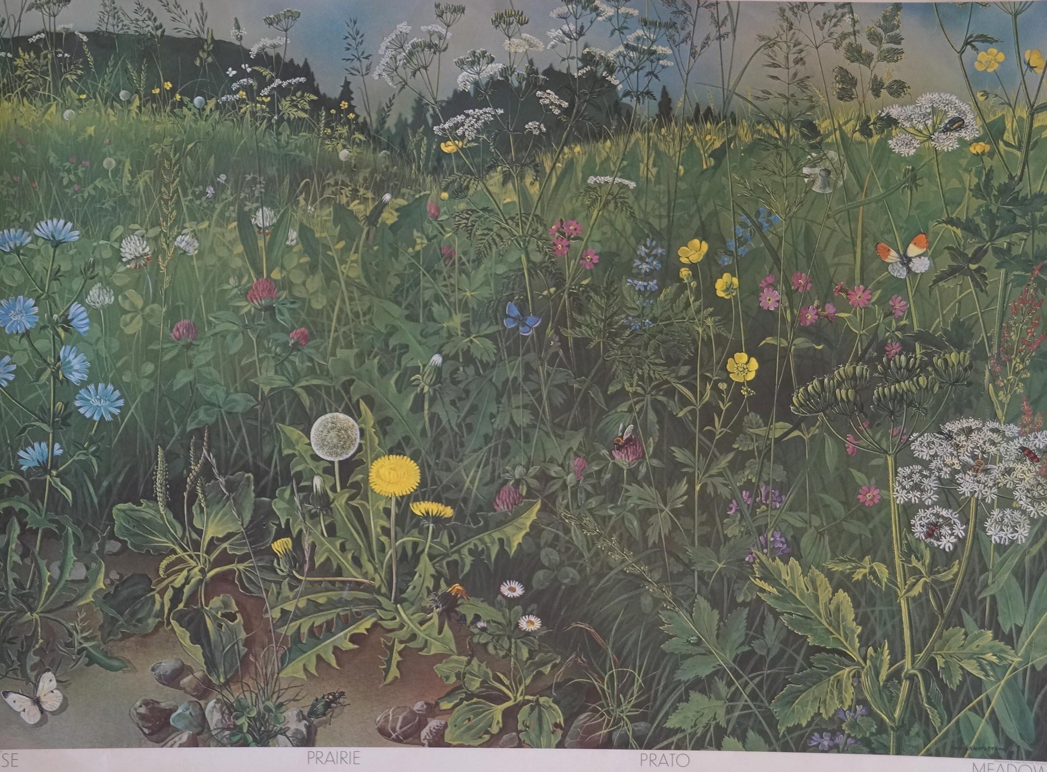 Schulwandbild Nr. 149 Wiese - Meadow von: Hans Schwarzenbach