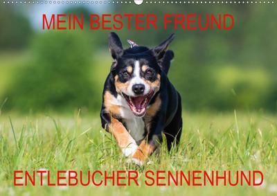 Mein bester Freund - Entlebucher Sennenhund (Wandkalender 2021 DIN A2 quer) : Die kleinste Rasse der Schweizer Sennenhunde - der Entlebucher (Monatskalender, 14 Seiten ) - N. N