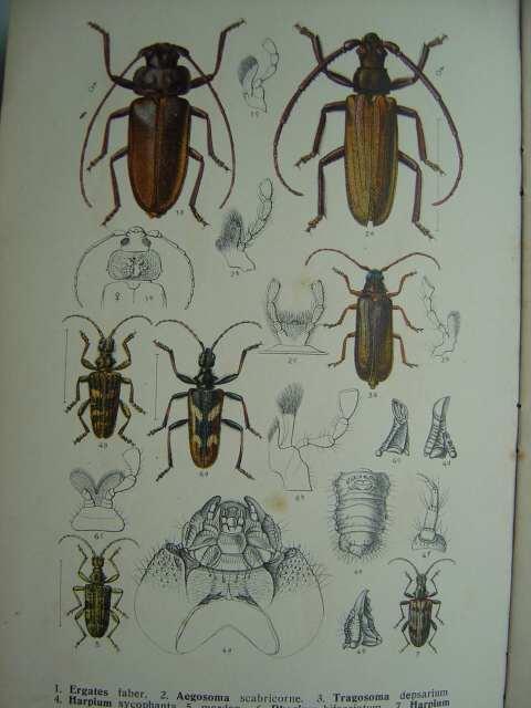 """Die Käfer des Deutschen Reiches. """"Fauna Germanica""""/Band: Reitter, Edmund."""