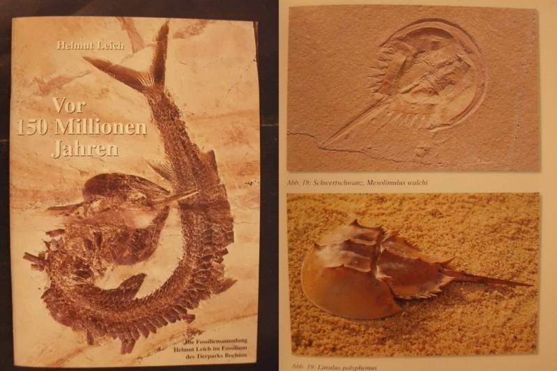 Vor 150 Millionen Jahren - Begleiter zur: Leich, Helmut