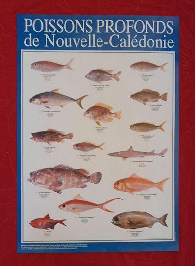 /60/cm r/éseau mer lac rivi/ère Leurre Nassa tromperie pour poissons 30/