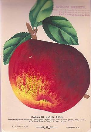 Nurserymen's Sample Book.: MITCHELL, W.T. and