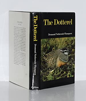The Dotterel.