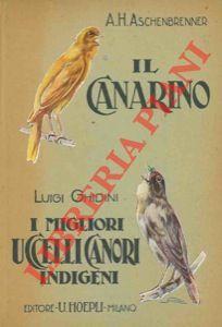 Il canarino. I migliori uccelli canori indigeni: ASCHENBRENNER A(nton) H(ermann)