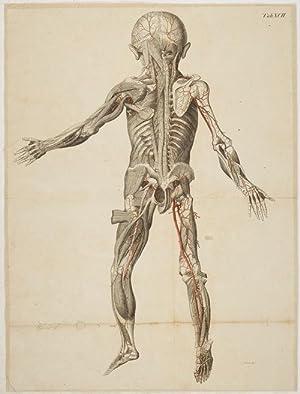 Anatomische Tafeln: Die vorderen und die hinteren: Loder, Justus Christian