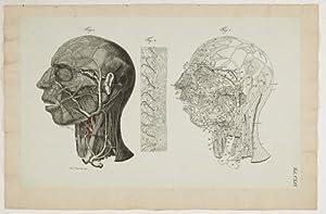 Anatomische Tafeln: Die oberflächlichen und tiefen Venen: Loder, Justus Christian