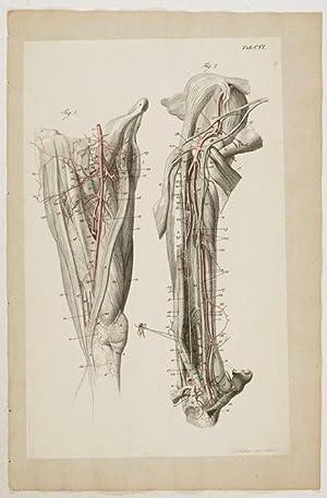 Anatomische Tafeln: Der Ober- und Unterschenkel und: Loder, Justus Christian