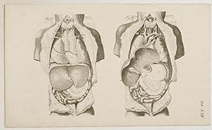 Anatomische Tafeln: Die Eingeweide der Brust und: Loder, Justus Christian