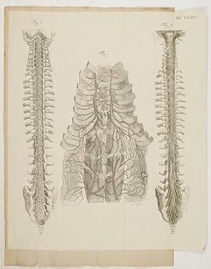 Anatomische Tafeln: Angiologie - Die inneren Brust,: Loder, Justus Christian