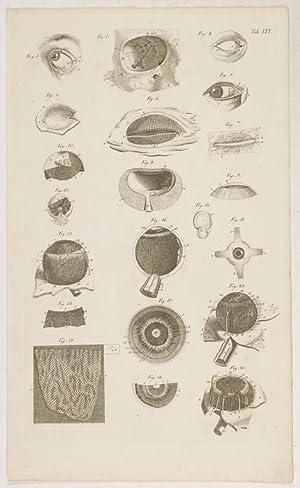 Anatomische Tafeln: Sinnes-Werkzeuge: Das Auge. 2 Tafelen: Loder, Justus Christian