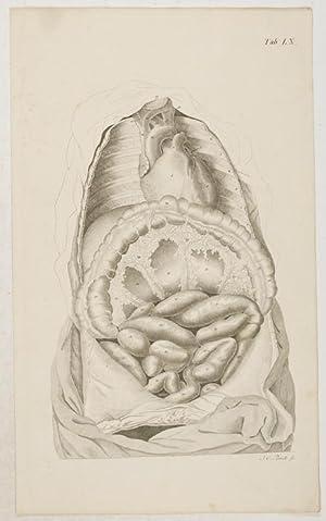 Anatomische Tafeln: Das Herz und die dünnen: Loder, Justus Christian