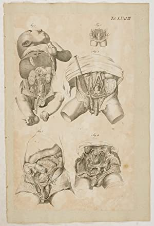 Anatomische Tafeln: Anatomie des Rumpfes und des: Loder, Justus Christian