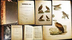 Skandinaviens Fugle Med Saerlight Hensyn Til Danmark Og De Norldige Bilande Plate Atlas Complete (...