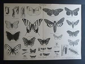Org Holzstich Schmetterlinge und Käfer