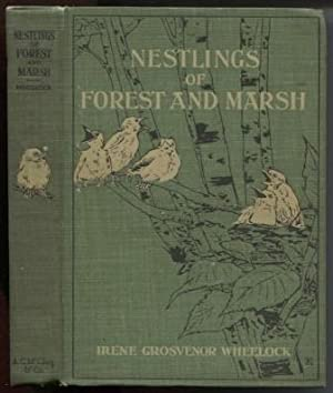 Nestlings Of Forest And Marsh