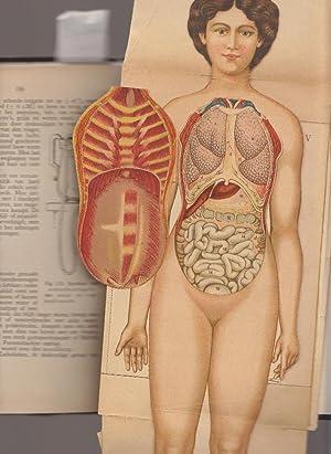 Het ontstaan, de ontwikkeling en de geboorte van den mensch.: Alberts, dr. J.E.
