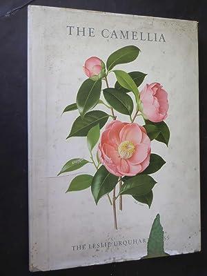The Camellia: Beryl Leslie Urquhart