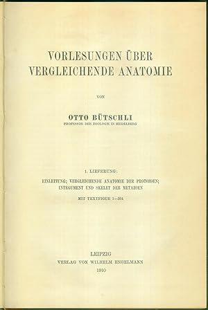 Vorlesungen über vergleichende Anatomie.: BÜTSCHLI, Otto: