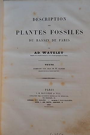 Description des plantes fossiles du bassin de Paris.: WATELET, Adolphe;