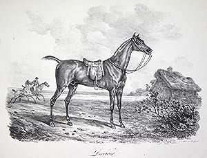 """Deceveir """". - Ein gesatteltes Pferd stehend (im Hintergrund ein gallopierender Reiter, der ein ..."""